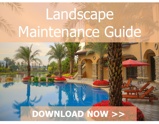 CTA_Maintenance_Guide-_VVI-1.png