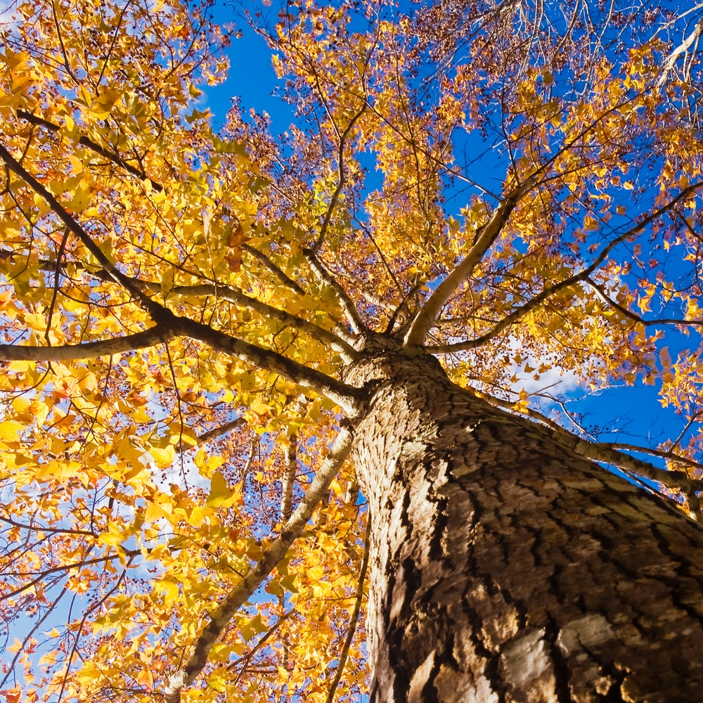 HOA, Condo Landscaping and Tree service